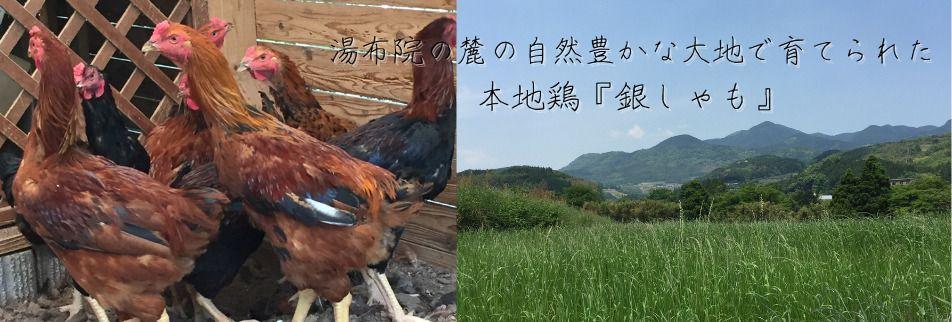 南大分 天然記念物の血を引いた本地鶏『銀しゃも』専門店。【 酉玄 】